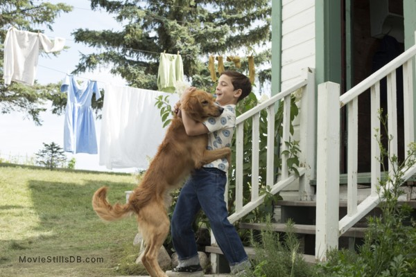 A Dog S Purpose Production Companies